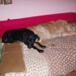 lisa i lady na mom krevetu