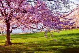 Voćka u proljece