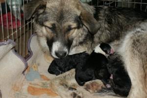 Mama bela i sedam beba