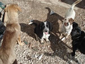 Zana, Mia i Mini