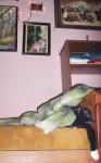Micika pajki sa šapicom preko kreveta