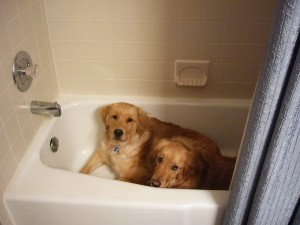 Dogs in the Bathroom