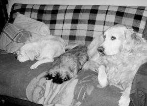 Luna, Bobica i Lisa